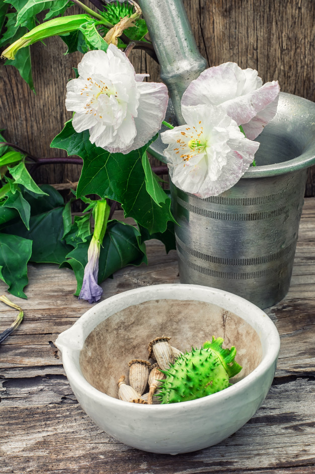 Ten most poisonous plants in the world