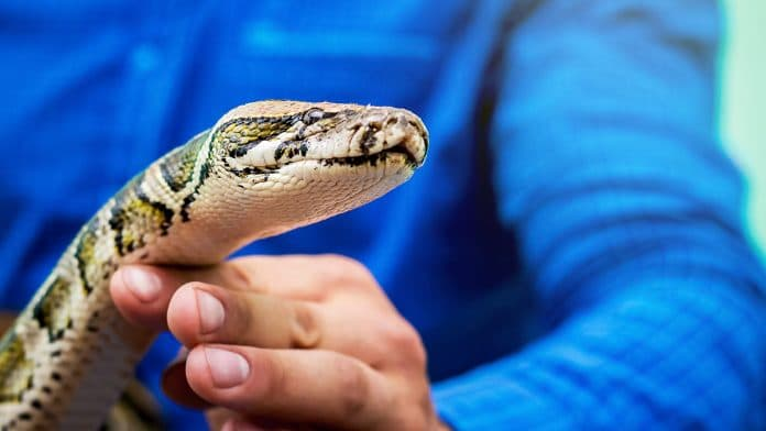 How To Survive A Snake Bite?