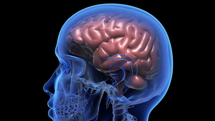 parasites that damage your brain